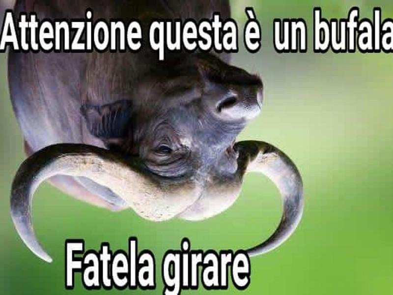 bufala e fake news (1)