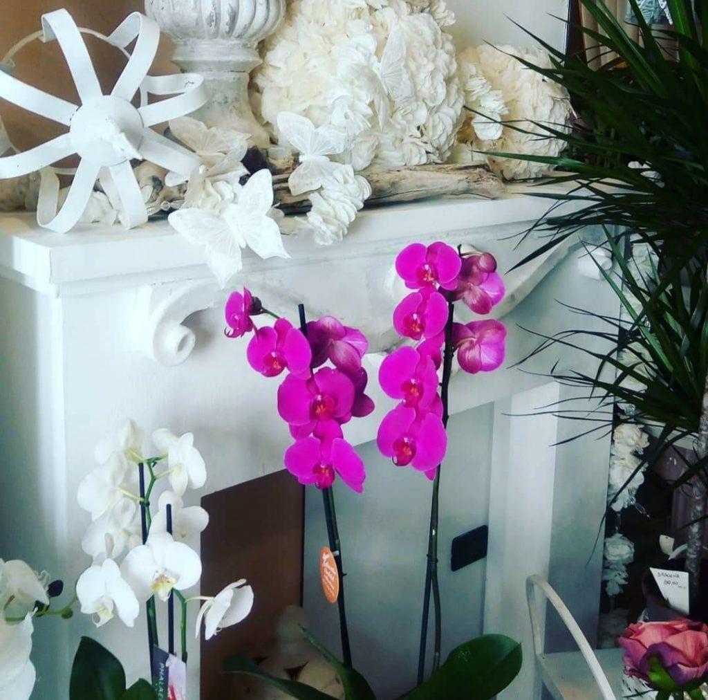 Riapertura fiori dautore by cleme 02